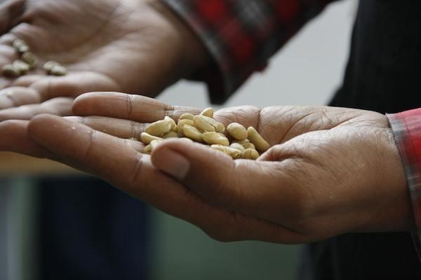 coffee beans 12